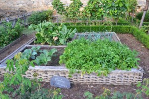 a beautiful garden with healthy soil makes the most nutritious foods